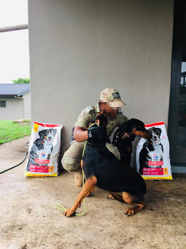 Ghost and Geko anti poaching dogs